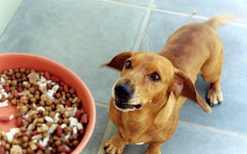 Receta de arroz con carne para perros pequeños