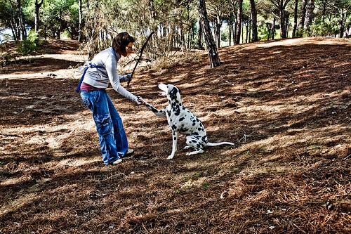 Cómo enseñar a un perro a dar la pata