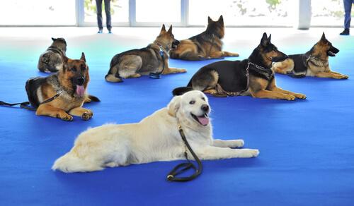 ¿Qué es la fisioterapia animal?