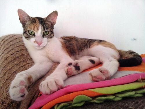Cómo prevenir el aburrimiento en tu gato