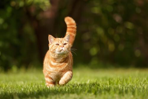 mimica y gestos en los gatos