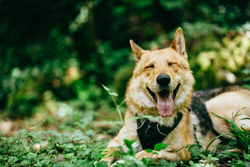La música clásica ayuda a nuestras mascotas a disminuir el estrés