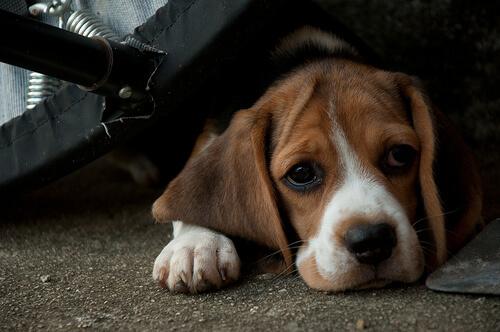 ¿A qué edad se producen más abandonos de perros?