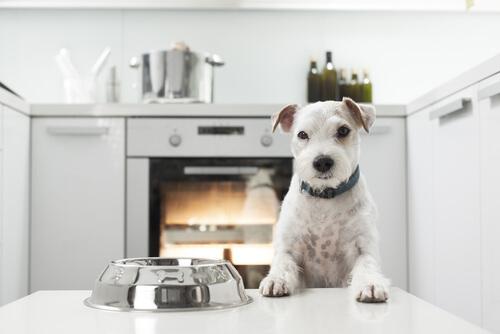 Señales de que tu perro no está siendo bien alimentado