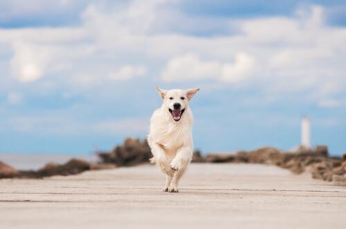 5 causas que pueden estresar a tu perro