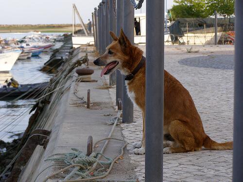Si tu perro te es fiel, ¿por qué no corresponder con el mismo amor?