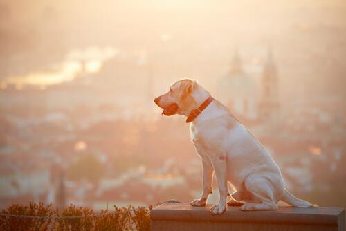 ¿Qué hago si encuentro un perro perdido?