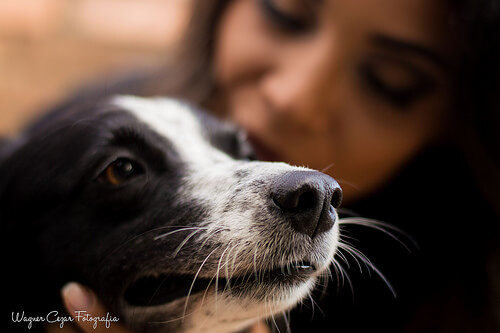 Los perros hacen tu vida completa