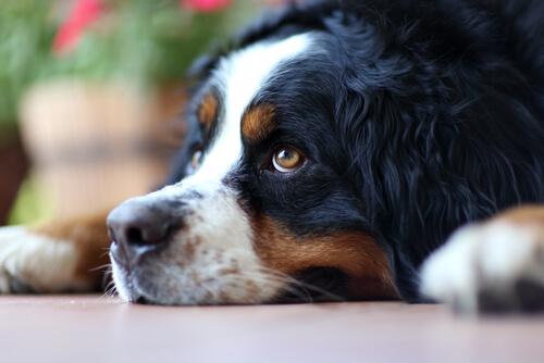 Por qué no hay que llamar a un perro por su nombre para regañarle