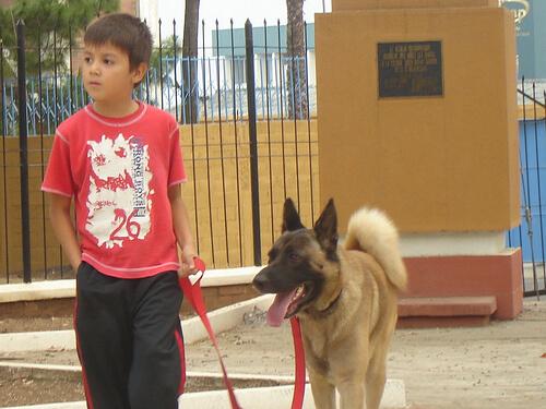 Un perro cuida de un niño enfermo