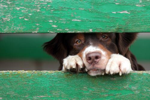 ¿Crees que es posible averiguar si un perro ha sido maltratado?