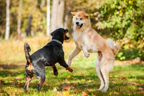 perros atacando