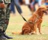 perros en guerra