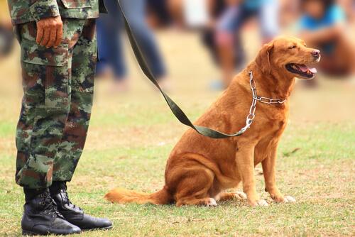 Historias de los perros en guerras