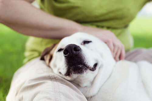 Carinho no cachorro