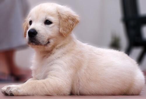 Los perros son como los humanos los hacemos