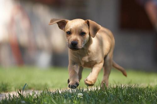 Para poder controlar al perro hay que saber controlarse uno mismo