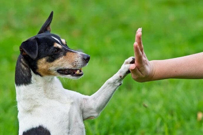 Cachorro toca a mão