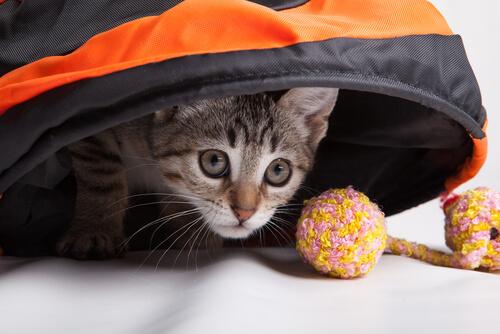 7 juegos para tu gato
