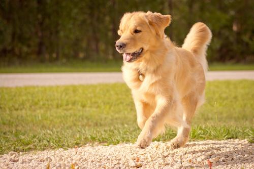 El perro representa todo lo mejor de una persona