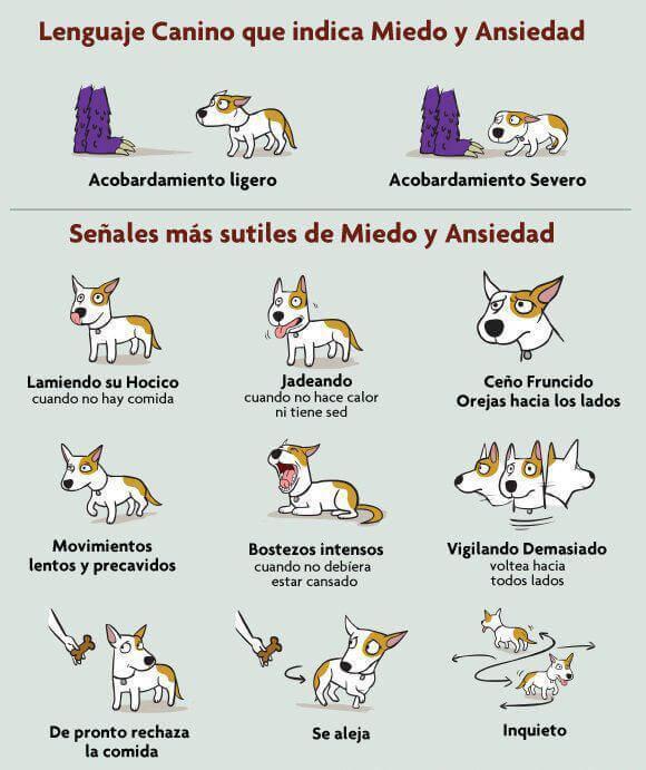 Linguagem canina