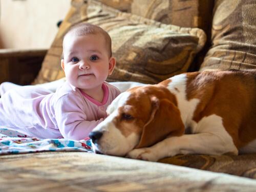 Una perra salvó a un bebé recién nacido de morir de frío