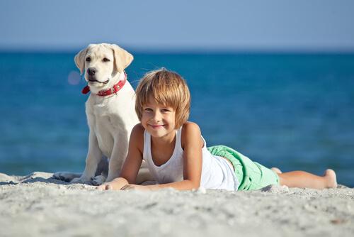 Un niño con autismo logra la socialización gracias a un perro