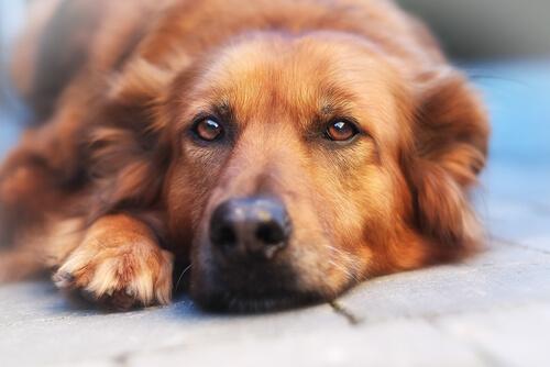 ¿Qué es la filariosis en perros?