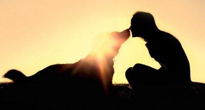 cachorro carinho com o dono