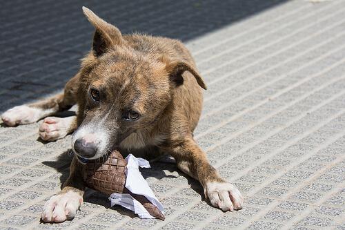 Alimentos que tu perro debe evitar
