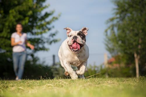 Consejos para correr con tu perro