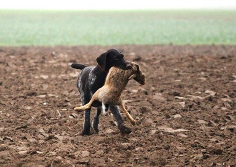 Perro con su presa
