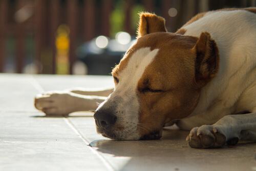Perro enfermo con los ojos cerrados