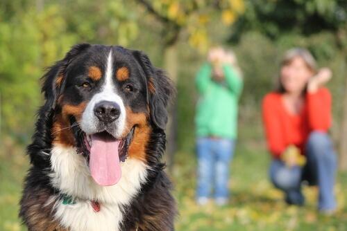 Un perro te será fiel hasta el último latido de tu corazón