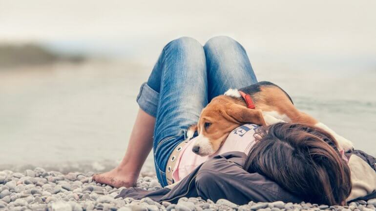 Beagle laying on top of a woman
