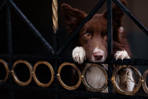Robo de perros: cómo evitarlo