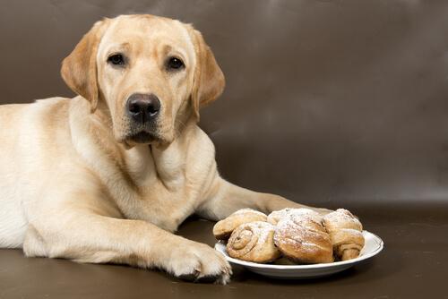 perro y canela