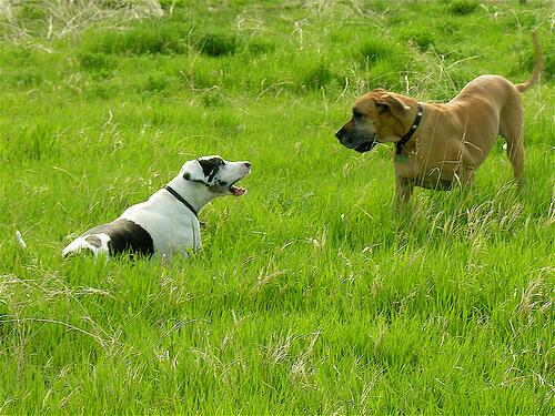 Perros comunicándose