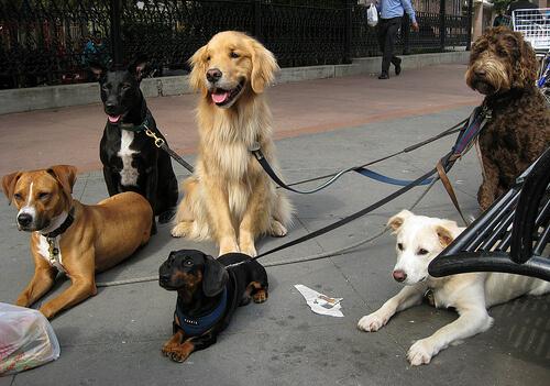 Psicología canina: préstale atención