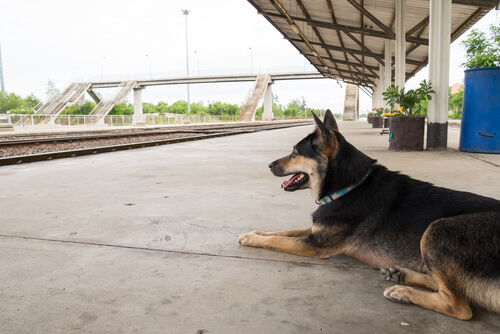 Dog abandoned at a train station