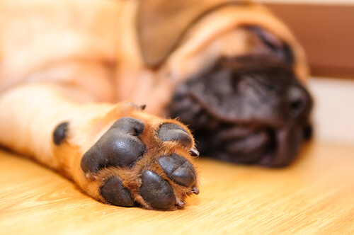 Dogs sweat through the pads on their paws.