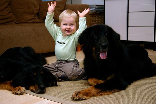 El amor por los animales comienza desde nuestra infancia