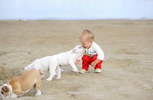 Bebé que convive con perros