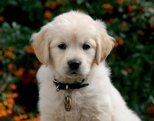 Lo que necesitas saber al conseguir un cachorro nuevo