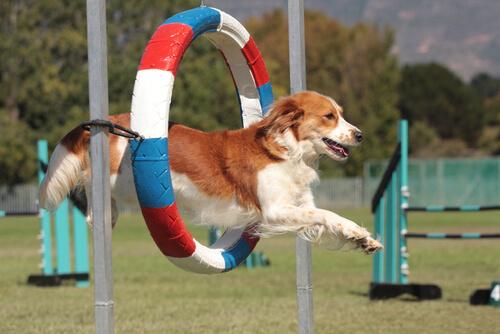 Principales deportes para perros