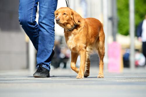 educar un perro a hacer sus necesidades