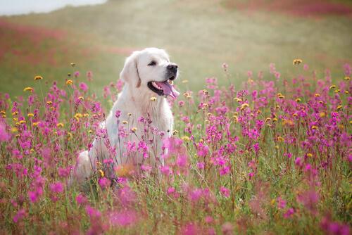 cachorro com flores