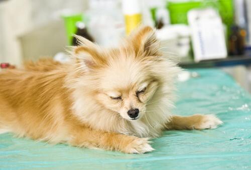 10 síntomas comunes de las enfermedades en los perros