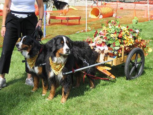El Festival de las Luces en Nepal dedica un día a los perros