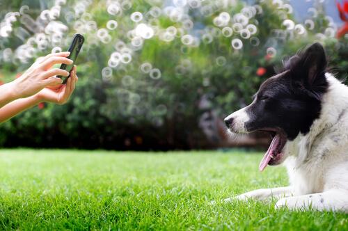 Foto a un perro